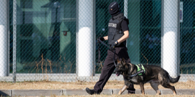 customs officer patrolling border with canine