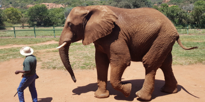 game warden walking with elephant